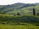 coline toscane
